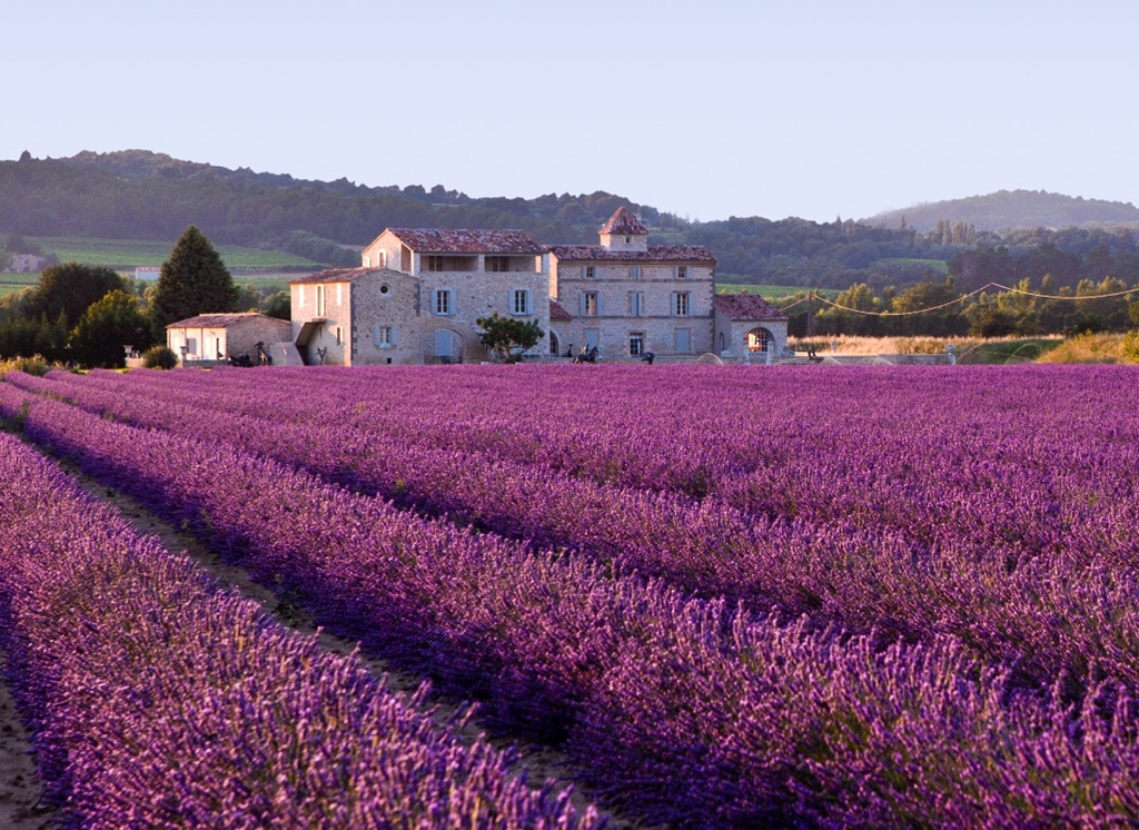 327852xcitefun-lavender-fields-provence-france-2